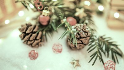 Christmas greenery with cones on snow
