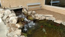 Aquatic Ecosystem at Sonnie Hereford